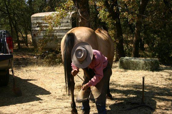 Wild Horse Sanctuary Manton, CA