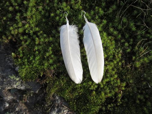 P H O E N I X M O O N // S H O P - Swan feather earrings