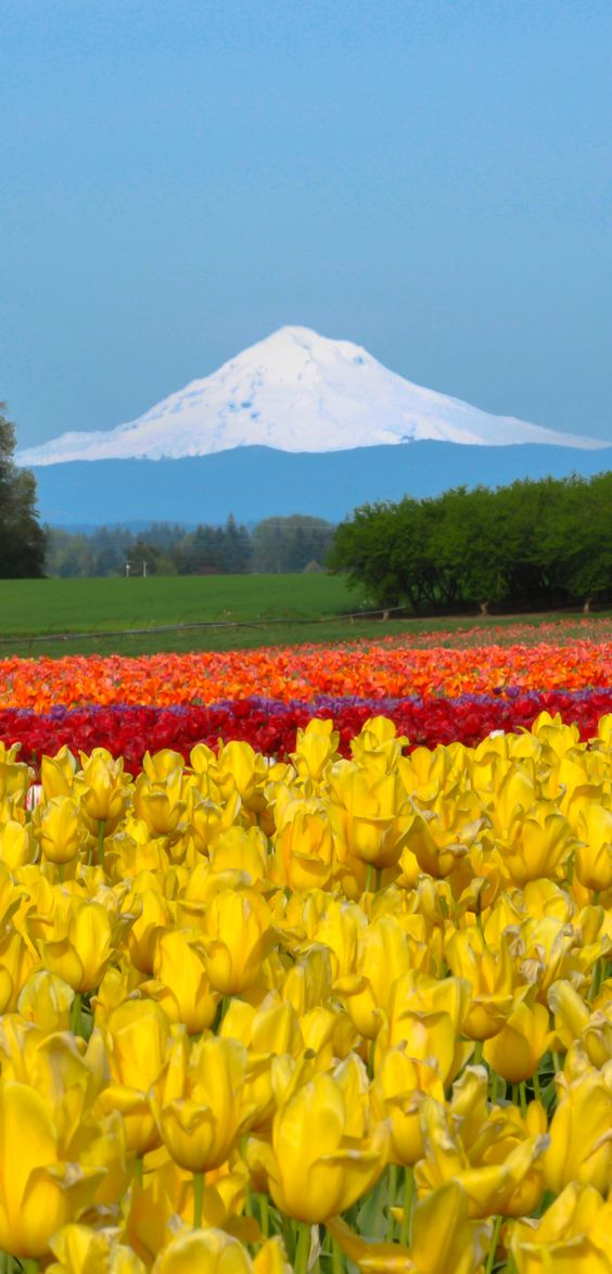 Pinterest the world s catalog of ideas for Oregon craft floral