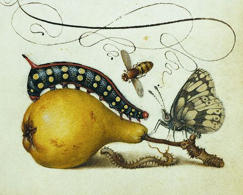 Joris Hoefnagel. Mira calligraphiae monumenta, circa 1590s