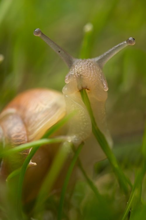 Look at this snail eating grass. Appreciate it. Now move on. - Imgur: