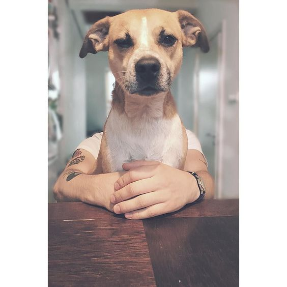 teresa the #giant #dog 2 #perspective #dogsofinstagram #vsco #vscocam by stskarzynski