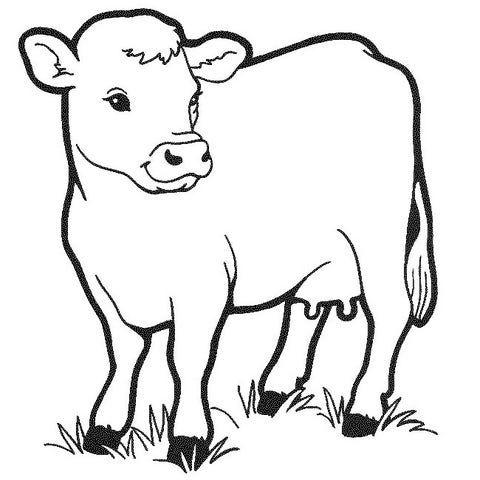 Animal Templates Free Premium Templates Cow Coloring Pages Cow Drawing Animal Coloring Pages