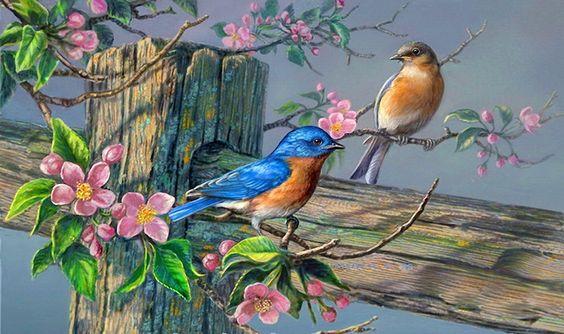 aves en spring branch wallpaper