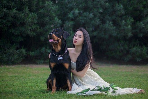 Rottweiler Dog Wedding Dresses Lawn With Images Best Guard