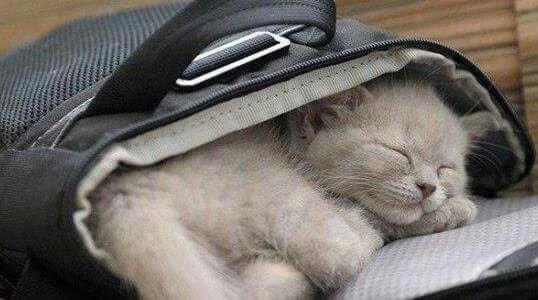 Kitten in case