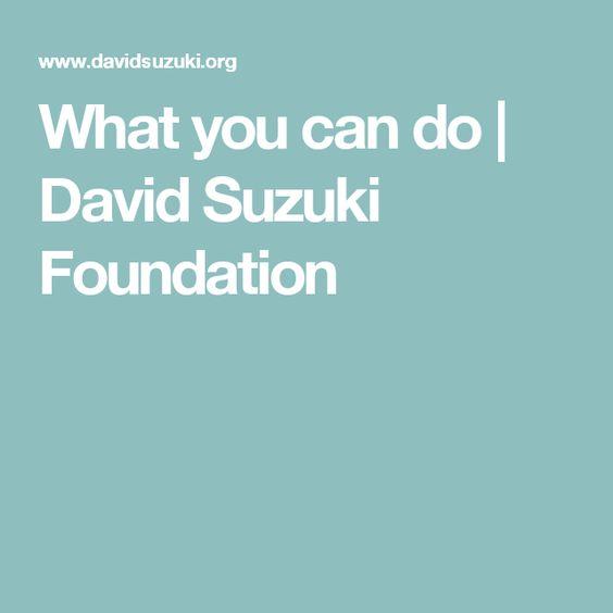 What you can do   David Suzuki Foundation