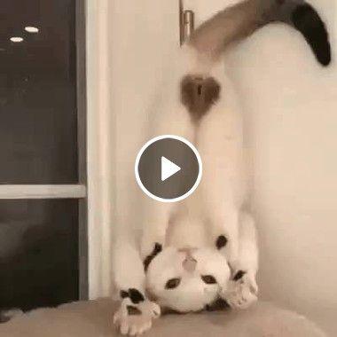 Gato maluco de ponta cabeça