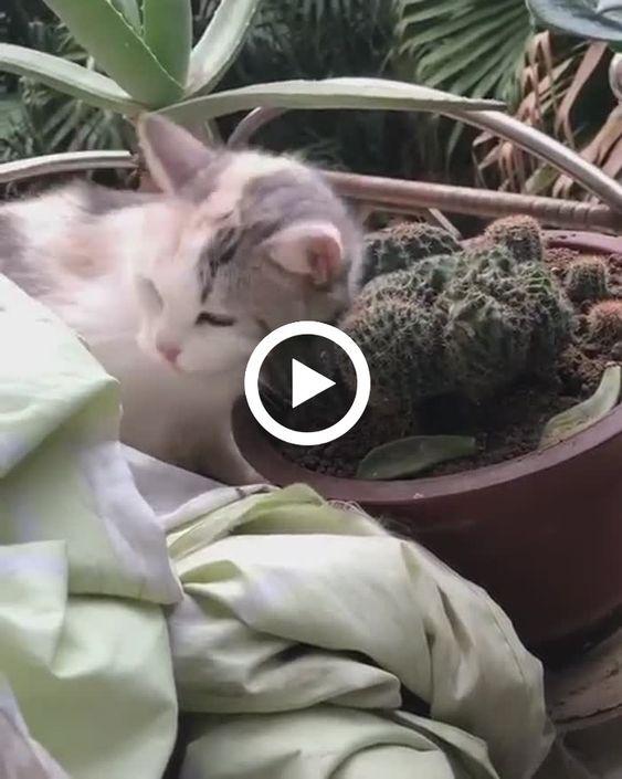 Esse gato só pode ser masoquista