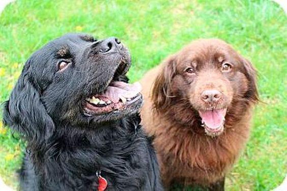 N J Pets In Need July 3 2017 Pets Dog Cat Labrador Retriever