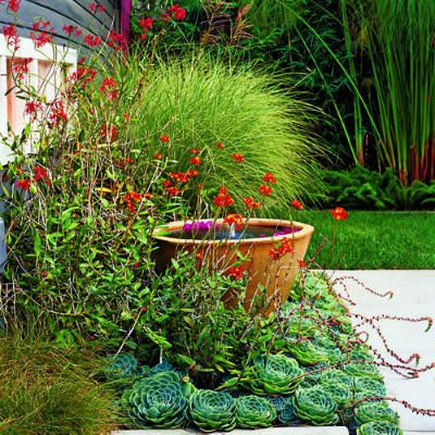 A small water feature garden - fountain surrounded by billowy grasses, succulents...