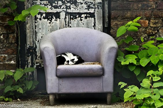 Top Cat On His Easychair:  #Abandoned #Chair