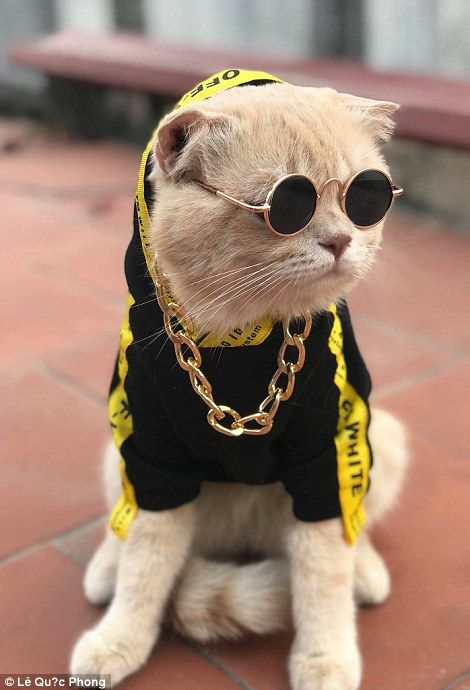 Pet Cat Dressed Like An Emperor Minds A Seafood Stall In Vietnam Pets Cats Cute Cats And Kittens Cute Baby Animals