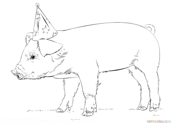 How to draw a cute baby pig Step