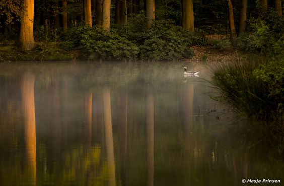 ***Duck and trees reflection (Netherlands) by Masja Prinsen on 500px