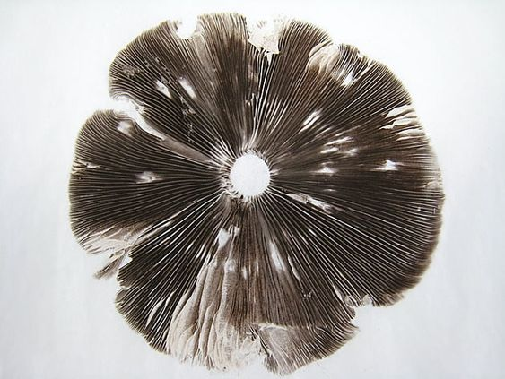 As with the fish print above, this mushroom spore print illustrates the beautiful intricacies – and also abstract pattern making – that can be achieved through the printing of found natural and manmade objects.