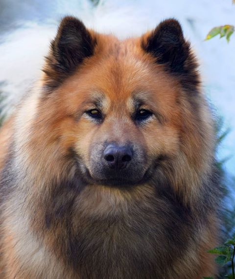 Not Just Another Pretty Face 8 Dogs Cute Dogs Breeds Dog Pictures