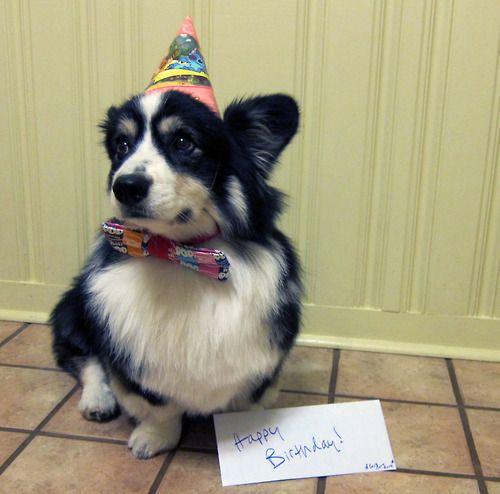 It's Pudge's Barkday!