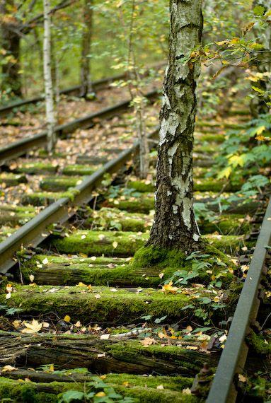 Trilhos abandonados, com a floresta ao seu redor.