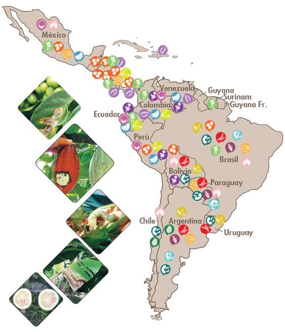 El mapa de plagas agricolas de Latam