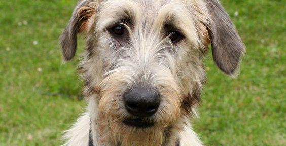 Hundeallergie - Sprechstunde - Unikosmos-Userin Doreen liebt ihren Mischlingsrüden - und ihren Freund Phil, der eine Hundeallergie hat. Sie fragt TK-Expertin Dr. Anderson um Rat.