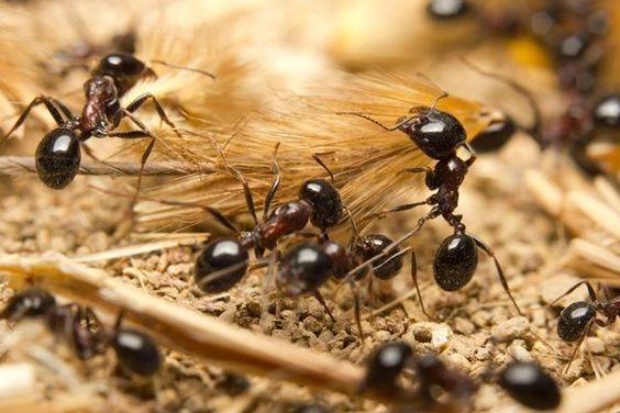 We provide effective #pest #control #service to protect your home from these unwanted guests. To get efficient services related to this, you can use our latest products and technology.