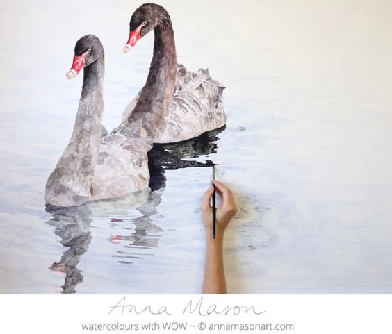 So graceful! Loving painting these swans and their reflections!