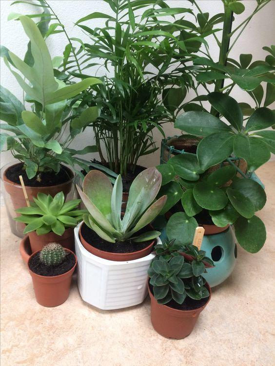 My beautiful new plant addition