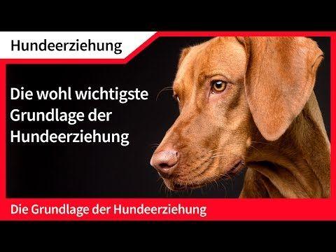Youtube Hundeerziehung Hunde Und Erziehung
