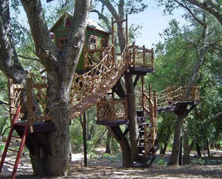 Tree house fun forest...