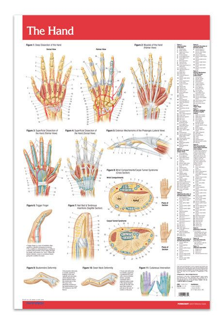 Poster Sizes Nail Bed And Joints In The Body On Pinterest