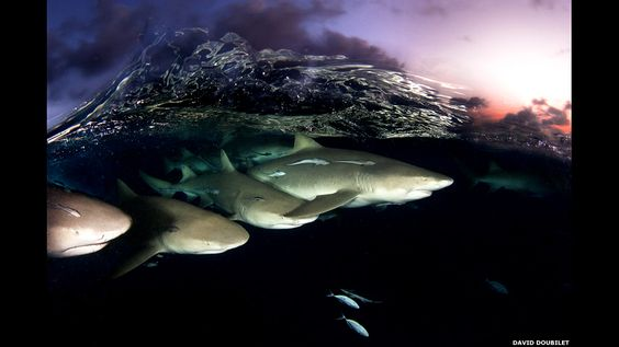 Patrulla de tiburones al atardecer, 2010. Tomada en Bahamas