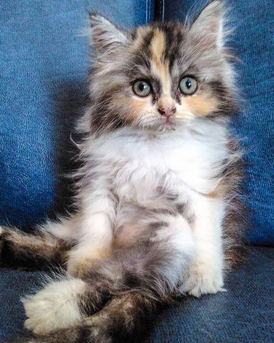 Sini duduk bareng Jean #cat #cats #catoftheday #catsofinstagram #fun by @mendadakotdor
