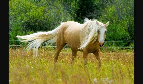 2 days left before Friday! Be brave #enjoyhorses Pour mes amis Français:Allez hop à Créteil;-) www.dddailynews.com