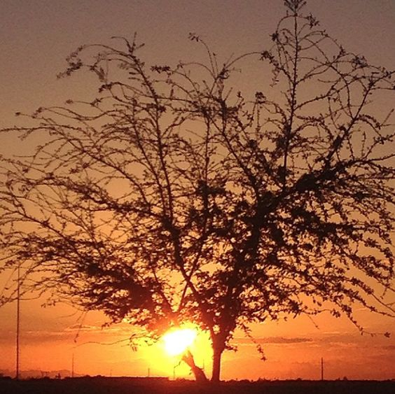 #sunrise in #Arizona #timechange #springforward #lionking #earlybirdcatchestheworm #nofilter #silhouette