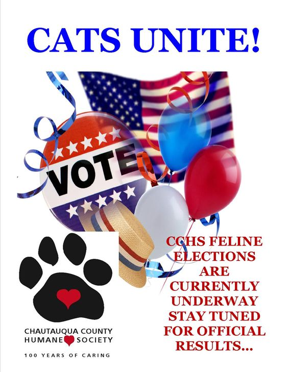 The cats at the shelter are currently demanding voice and vote--