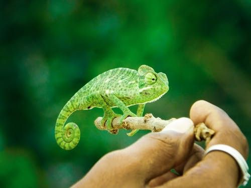 Heirs Of The Earth The Story Of Reptiles Reptiles Reptiles Pet Reptiles Facts