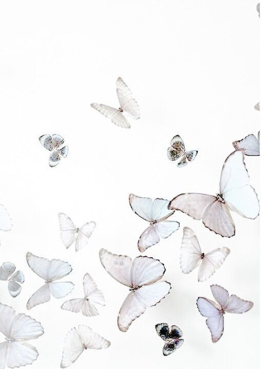 Pin By On S White Aesthetic Aesthetic Colors Butterfly Wallpaper