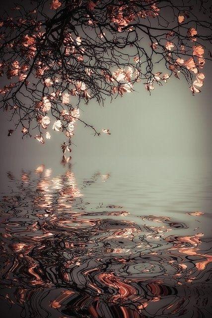 Fotografie von Kirschblüten. Die Natur hat viele schöne Fassetten.