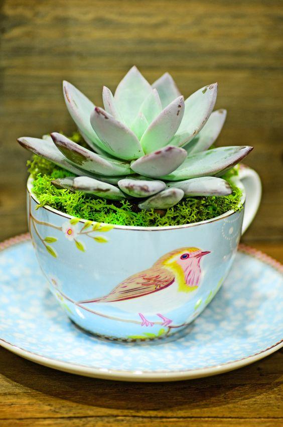 Centro Garden Pip Tea