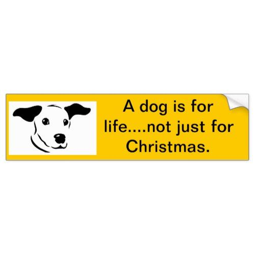 A Dog Is For Life Bumper Sticker Bumper Stickers Dogs