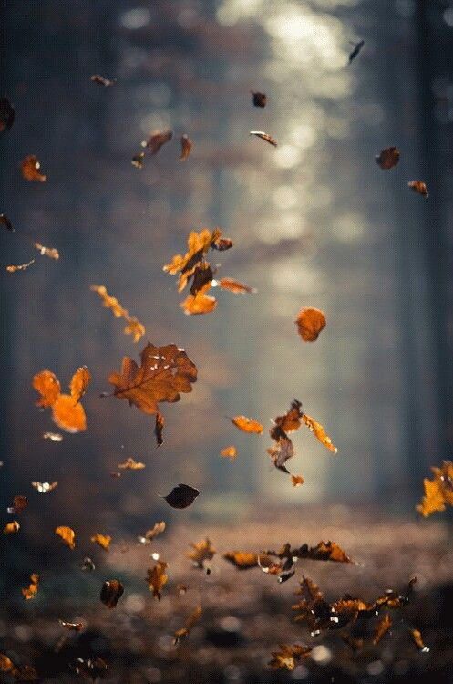 Russet gold haphazardly fall to the ground, with an artless grace that the most accomplished ballerina will find difficult to match.: