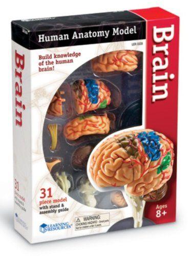 Learn the brain anatomy game