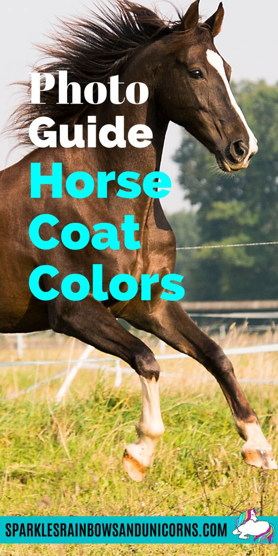 Would you like to be able to identify horse coat colors? Next time you see a horse in person, in a picture or in a video, you will be able to determine the most of those horse's coat colors. Look at this photographic guide that goes over much more than the basic colors most know about.
