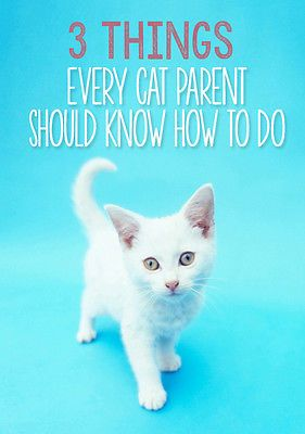 Cats are generally easy to care for. Besides their adorably quirky nature and their distinct personalities, it's one of the many reasons they make wonderful companions! Sure, you've mastered keeping the litter box clean, feeding a high quality diet and providing fresh water at all times, but here are 3 more simple things that every cat parent should know how to do::