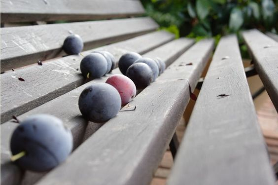 Berry Bench
