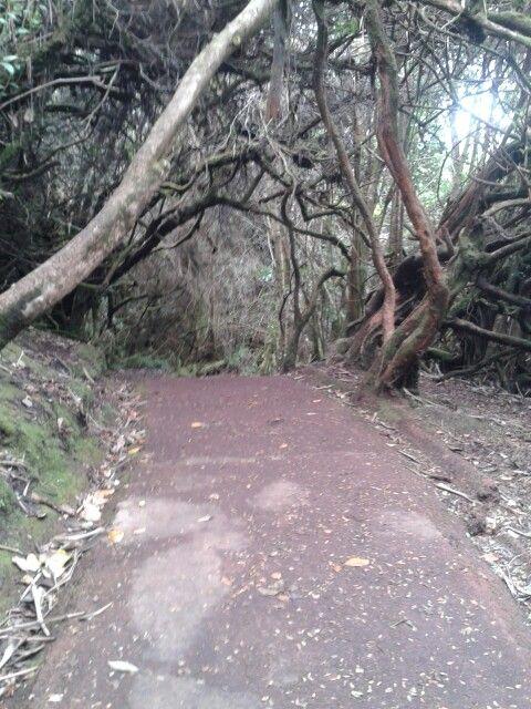 Parque del volcan Poas