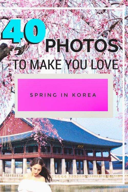 Spring In Korea 40 Photos To Convince You It S The Best Time To Visit South Korea Korea Travel Travel Destinations Asia Travel