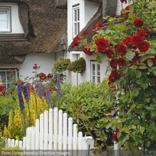 Eine Liebeserklärung an den eigenen Vorgarten symbolisieren die roten Rosen. Das gepflegte Reetdachhaus und die farbigen Blumen schaffen einen heimischen Eindruck und begrüßen den Besuch schon freundlich beim Betreten des Vorgartens. Hier kommt man gern nach Hause.