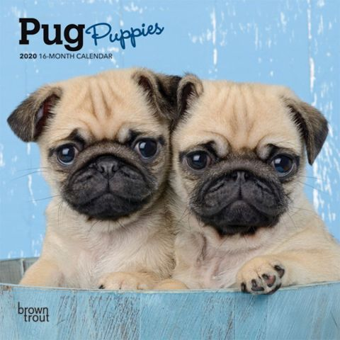 2020 Pugs Pug Puppies Calendar It Makes Perfect Sense To Pug